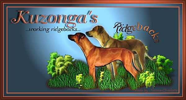 Follow Us on Kennel Kuzonga